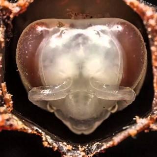 TO MORATE VIDETI: Kako se 'rodi' čebela (video)