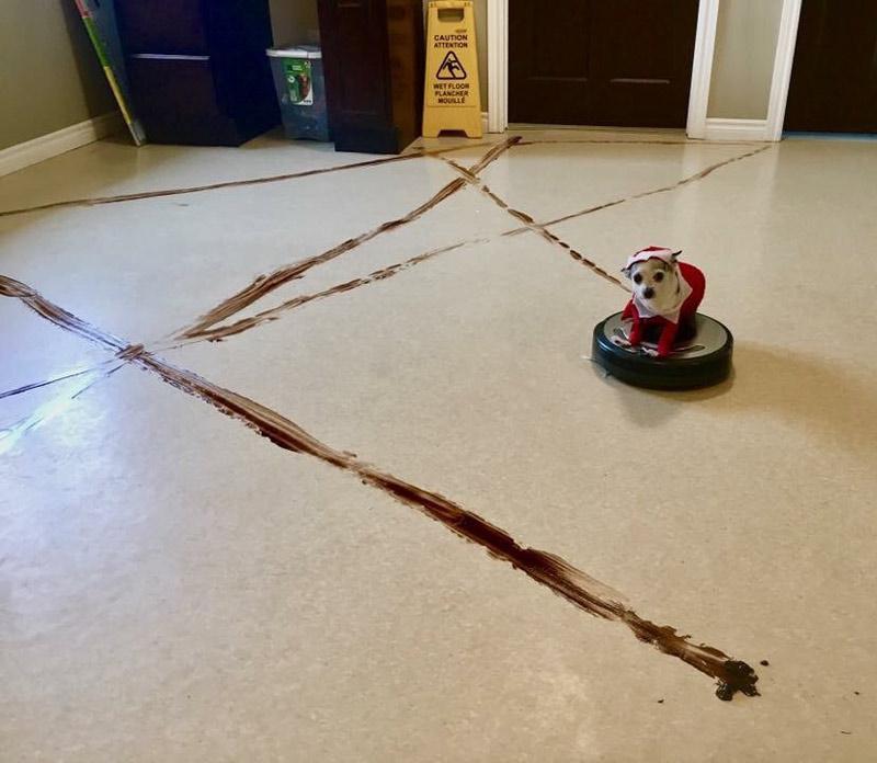 Robotti Imuri Koirankakka