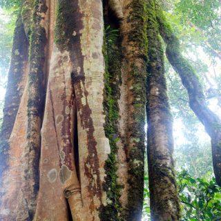 najstarejši gozd na svetu